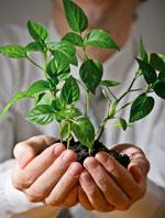 businessman holding green plant