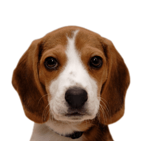 Cute Puppy from PawsForLife.com.au