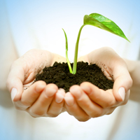 Seedling growing in a woman's hands