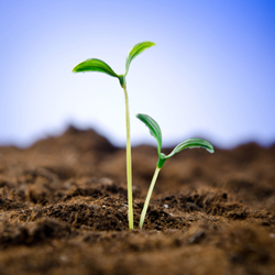 Seedling planted in ground, to represent growth