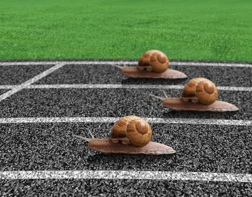 snails on a running track
